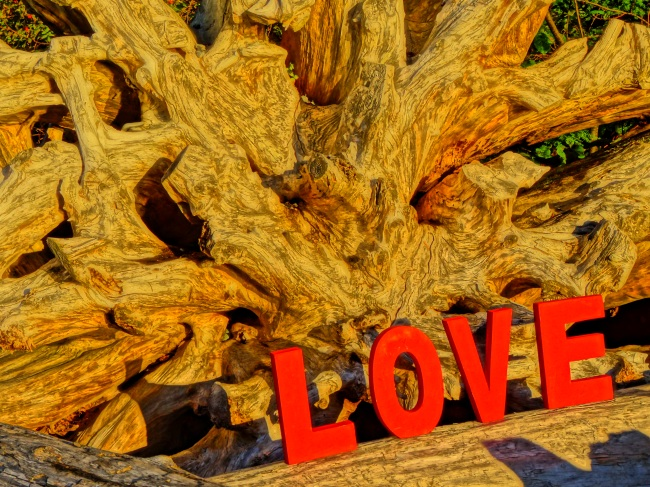 Roots of Love