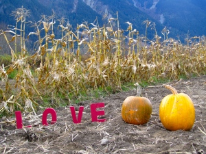 Love Two Pumpkins